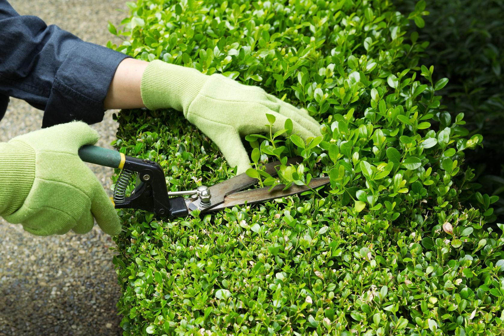 Acciones de mantenimiento de jardines en Madrid